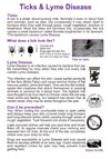 Tick's Lyme Disease